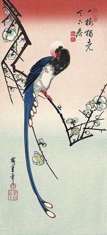 歌川広重「白梅に寿帯鳥」