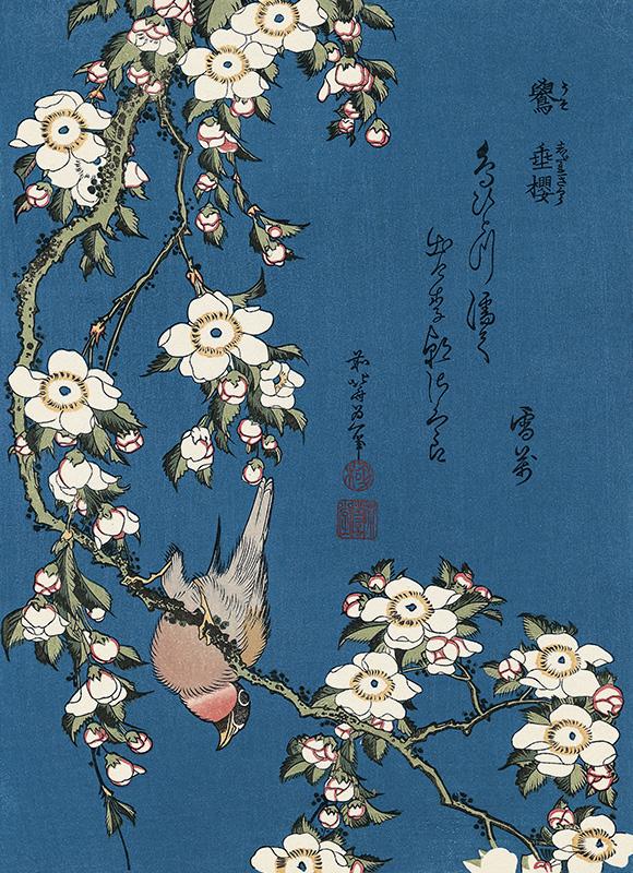 葛飾北斎「鷽に枝垂桜」