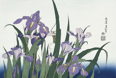 Blossoming Irises and Grasshopper