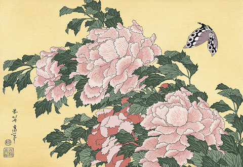 Tree-peony and Butterfly