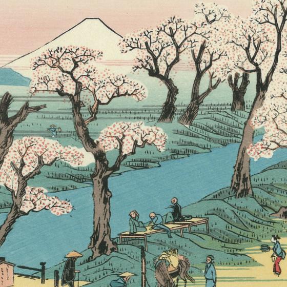 川辺の広々とした桜並木。しっかりとした幹が、古木であることを窺わせます。このあたりの桜は「小金井桜」と呼ばれ、古くからの桜の名所として親しまれていたようです。