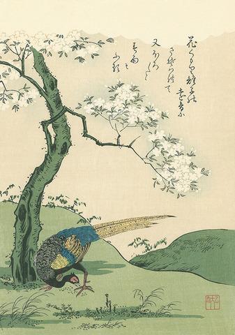 桜花に雉子