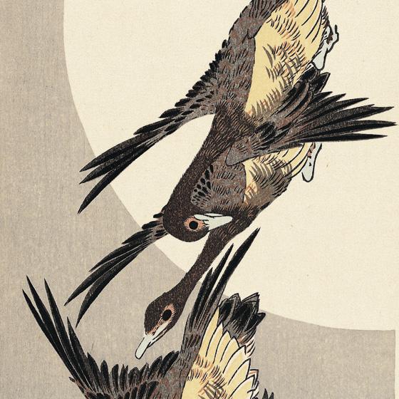 秋空に飛ぶ物寂しそうな雁を広重は抒情性豊かに描い... 秋空に飛ぶ物寂しそうな雁を広重は抒情性豊