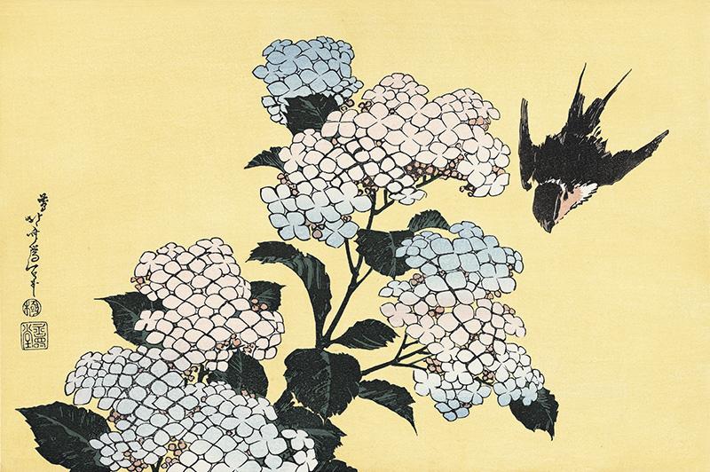 葛飾北斎 紫陽花に燕
